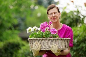 mogen kvinna som bär korg av pelargoner foto