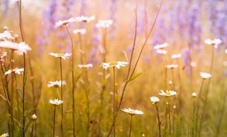 äng blommor foto