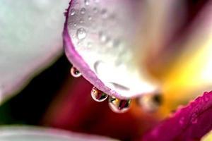 tropiska blommor foto