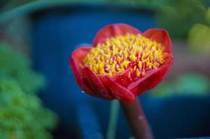 ovanlig blomma foto