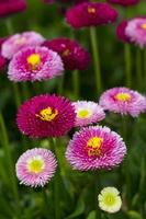 blomsterträdgård foto