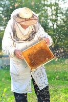 erfaren senior apiarist och svärm av bin i bigården foto