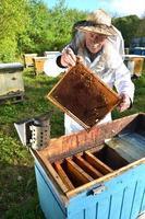 erfaren senior apiarist gör inspektion i bigården efter sommarsäsongen foto