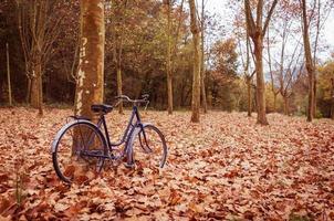vintage cykel lutad mot ett träd och höstlöv