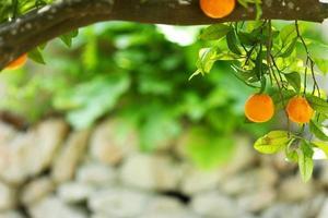orange närbild foto