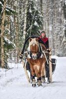 häst och släde i skogen foto