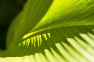 blad, närbild