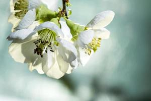 blommar närbild. foto