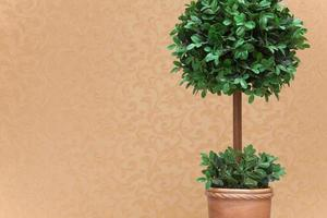 topiary närbild foto