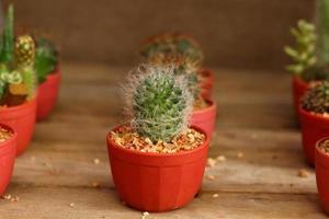 närbild kaktus foto