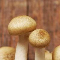 närbild svamp foto
