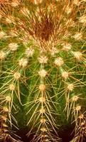 kaktus - närbild foto