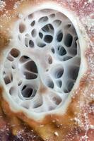 svamp på nära håll foto