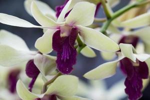 stängt upp orkidé foto