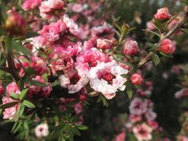 blommor närbild. foto