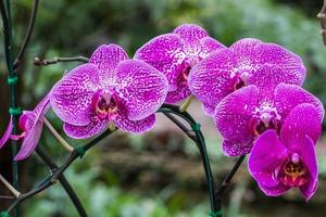 stängt upp orkidé