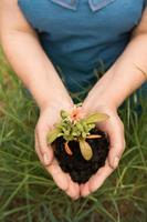 ekokoncept för jordbrukare i trädgård med skörd foto