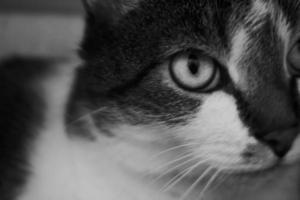 närbild katt. foto