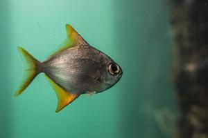 fisk på nära håll foto
