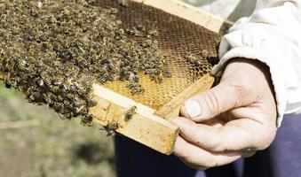 närbild honungskakor foto