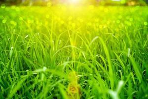 grönt gräs och ljus. foto