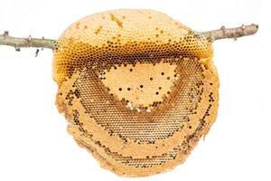 honungskaka på nära håll