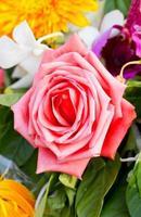 rosa ros på nära håll. foto