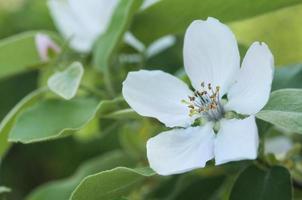 kvitten blommar på nära håll foto