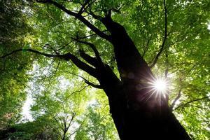 färska gröna träd foto