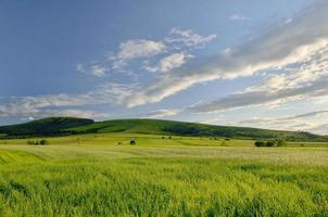 grönt fält och ljusblå himmel foto