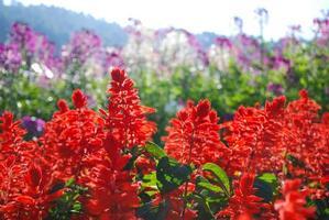närbild röda blommor foto
