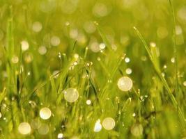 färskt grönt gräs foto
