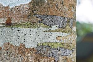 trädstam på nära håll