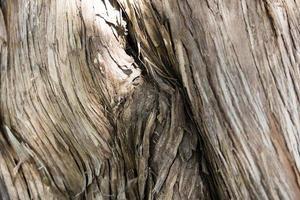 trädstam på nära håll foto