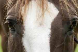 hästar möter närbild foto