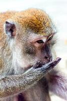 närbild av makak foto