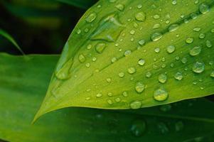 vått blad på nära håll