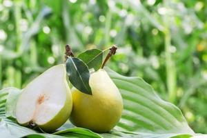 närbild av päron foto