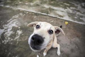 närbild hund öga foto