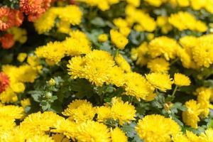 närbild blommor bakgrund. foto