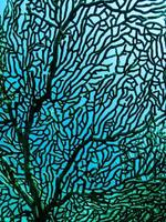 fläkt korall på nära håll foto