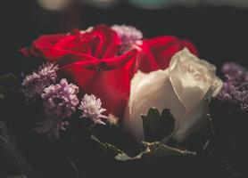 närbild av rosor.