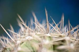 öken kaktus på nära håll foto