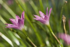 närbild av vilda blommor foto