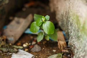 närbild växten växer upp foto