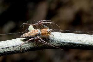 Spindel. närbild. foto