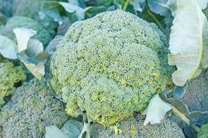 färsk broccoli på nära håll foto
