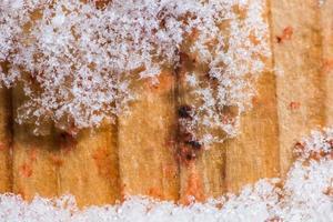 närbild snö