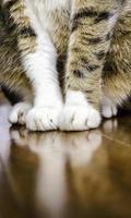 sittande katt. foto