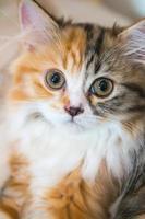porträtt av en liten kattunge närbild foto